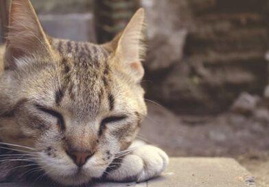 Jak wyłączyć hibernację?